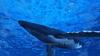 Image CG whales