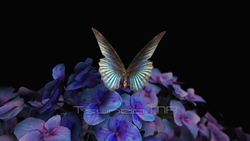 Image CG Butterfly