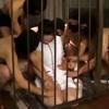 【クリスタル映像】爆乳看護師ドMいいなりメス奴隷 #001