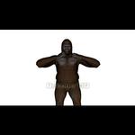 Image CG Gorilla