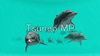 Illustration CG Dolphin