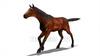 映像CG 馬 Horse Loop120327-001